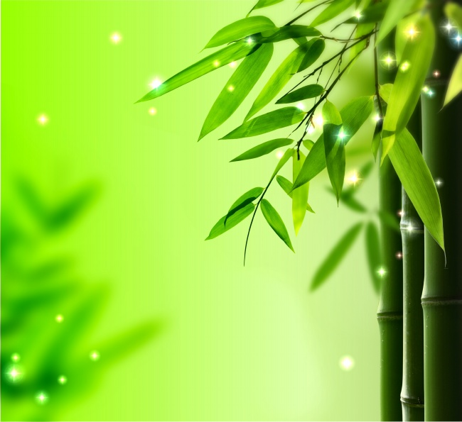 light green bamboo leaves background hq free download 9910 seek gif
