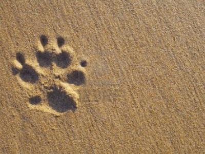 Related Pictures Background With Dog Paw Print And Bone Vector