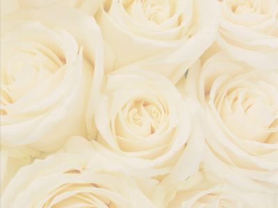Related Pictures Wedding Roses Backgrounds Hd Wallpaper Background