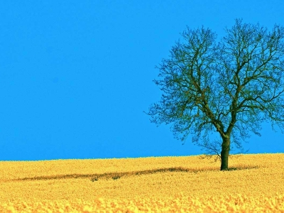 Field And Tree Backgrounds For PowerPoint Nature PPT  1280x800  jpeg #4714