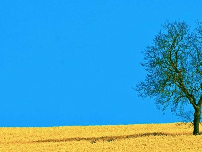 Field And Tree Backgrounds For PowerPoint  Nature PPT Templates #4716