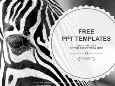 Image Of A The Face Of A Zebra Close Up PowerPoint Templates (1