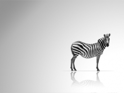 On August 31, 2015 By Admin Comments Off On Zebra HD Wallpapers