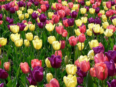: Spring Flowers Wallpapers, Images, Photos, Pictures And Backgrounds