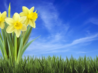 /wallpapers/nature Wallpapers/sp  Llpapers/spring Background