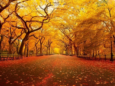 10 Literary Quotes To {Fall} In Love With Autumn