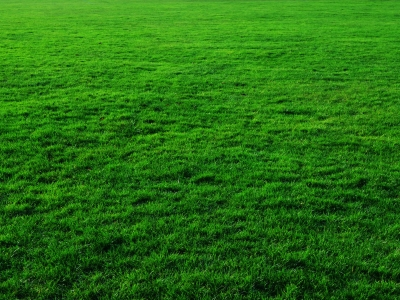 Animated Grass Background If You Need Grass Background