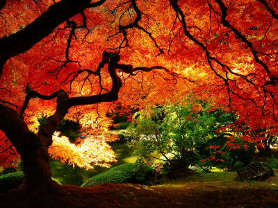 Autumn Wallpapers  Best Wallpapers