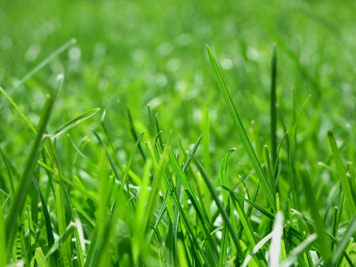 Cover Background Light Grass Carpet Background Design 2560x1600 Pixel   #5436