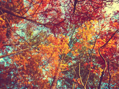 Fall Background Pictures Tumblr  clipartsgram  #5251