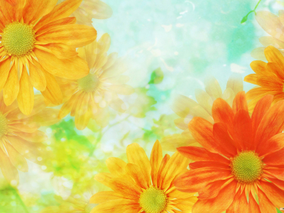 Flower Backgrounds  Download HD Wallpapers