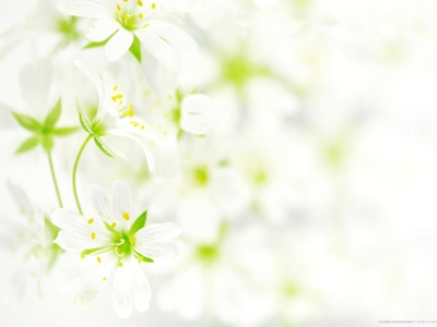 Flowers Background Wallpaper 2560x1600 Flowers, Background #3809
