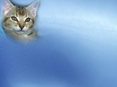 Free Animal Pets Cat Backgrounds For PowerPoint  Animal PPT Templates