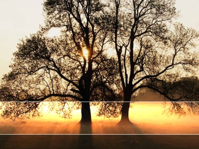 Free Tree Sunlight Landscape Backgrounds For PowerPoint  Nature PPT