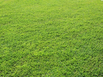 Grass Background Free Stock Photo  Public Domain Pictures