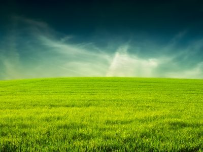 Grass Background Wallpapers  WIN10 THEMES