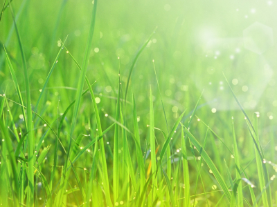 Grass Wallpapers HD Pictures  Live HD Wallpaper HQ Pictures, Images   #5445