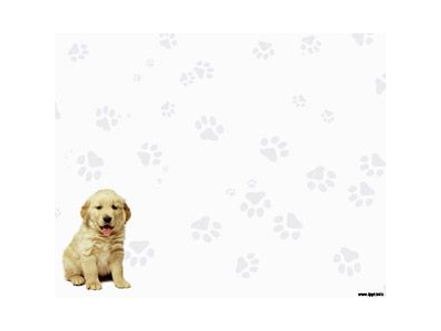 Labrador Retriever Powerpoint  Plantillas PowerPoint Gratis #6217