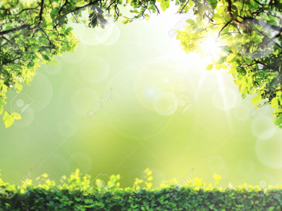 Natural Green Spring Or Summer Season Abstract Nature Background   #6272
