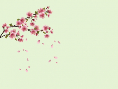 Spring Flowers Backgrounds  Flowers  Powerpoint Backgrounds