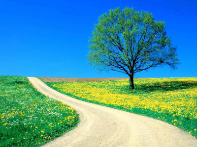 Tag: Spring Wallpapers, Backgrounds, Photos, Pictures,and Images For