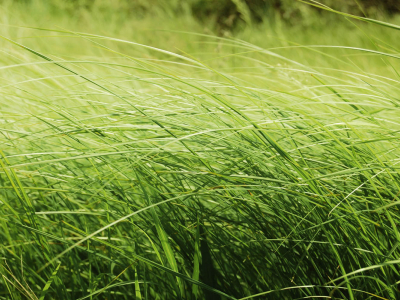 Tag: Tall Grass Wallpapers, Backgrounds, Photos, Images AndPictures