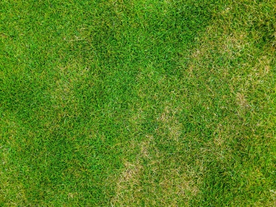 Top Down  Grass Texture Or Green Lawn Background Photo Image