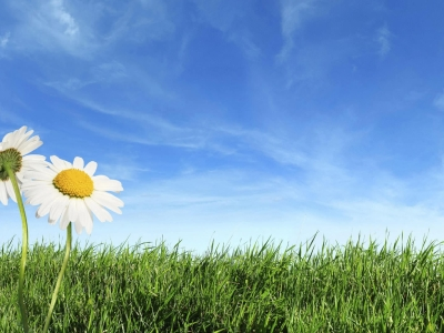 Wallpapers, Spring, Backgrounds, Wallpaper, Nature