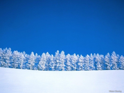 Winter Trees  Winter Wallpaper (509498)  Fanpop #3691
