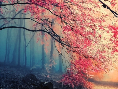 Beautiful Forest HD Background Wallpapers 5025  HD Wallpapers Site