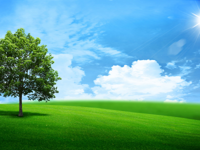 Beautiful Green Landscape Wallpaper