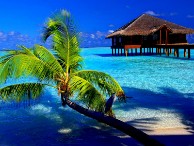 Tropical Background  Latest Hd Wallpapers