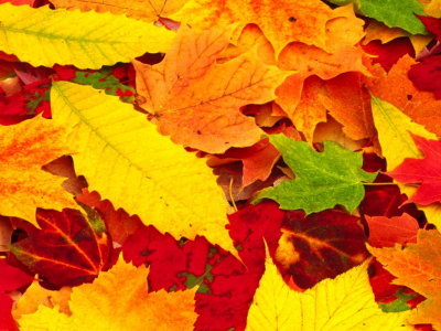 Wallpapers ,Sad Poetry Wallpapers,: Red Autumn Leaves Wallpapers hd #8272