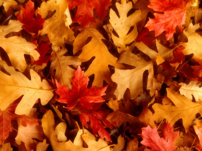 autumn leaves background wallpaper images 1920x1200 #8215