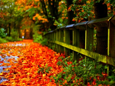 Autumn Leaves  Hd Wallpapers #8270