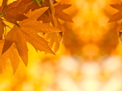 Autumn Leaves Twitter Background Backgrounds ~ Fall Leaves Background   #8227
