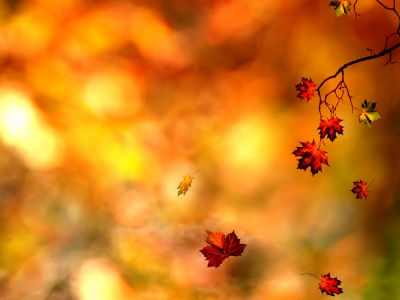 Autumn Leaves Wallpaper Related Keywords & Suggestions  Autumn Leaves   #8236