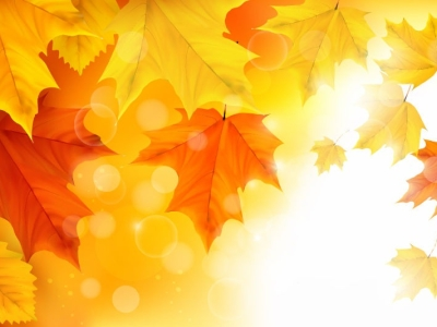 Autumn Maple Leaves Background Illustration Vector  Free Vector   #8264