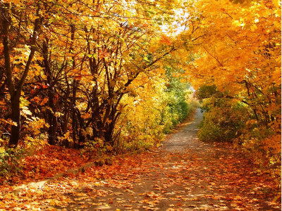 Autumn Scenery Wallpapers, BeautifulAutumn Scenery Desktop Wallpapers