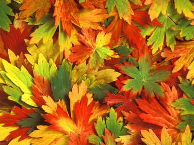 Fall Leaf Backgrounds  wallpaper, wallpaper hd, background desktop #8212