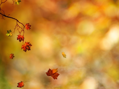 Fall Leaves Background 6016 2560x1600 px High Resolution Wallpaper   #8245