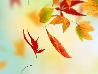 Fall leaves iphone background  iPhone Wallpapers  Pinterest #8268