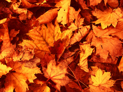 Fall Leaves Mobile Wallpapers 3908  Amazing Wallpaperz