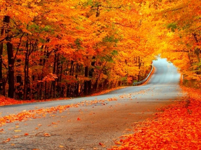 Fall Wallpaper  HD Wallpapers Backgrounds Of Your Choice