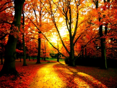 Fall Wallpapers  HD Wallpapers Backgrounds Of Your Choice
