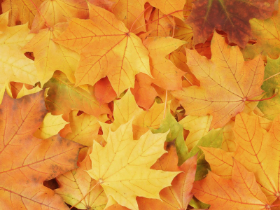 Falling Leaves Background Tumblr Fall Leaves