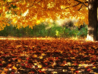 HD Fall Scenery Wallpapers