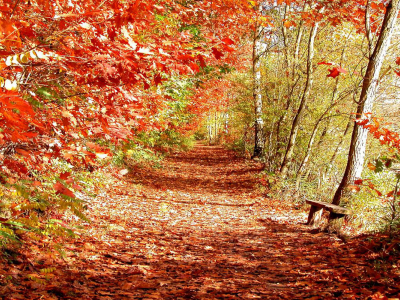 Tag: Beautiful Autumn Scenery Wallpapers,Backgrounds, Photos, Images
