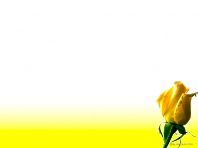 Yellow Rose Flower Powerpoint Background  WOMENS MINISTRY  Pinterest