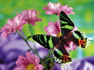 Butterfly With Flowers Background Hd
